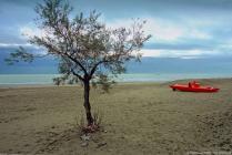 3-albero-in-spiaggia